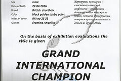 Grand Inter Champion1_edited_edited.jpg