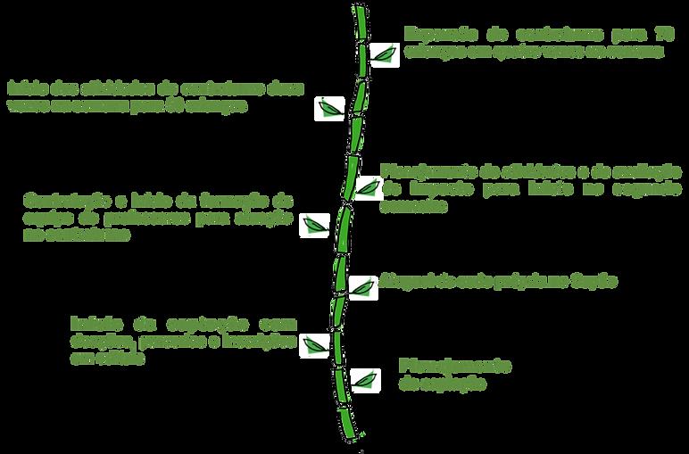 prox.passos verde claro.png