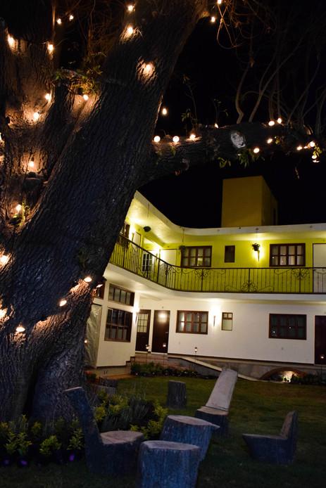 Arbol Antiguo en Patio en Hotel Las Candelas