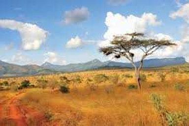 Kenya Tamu