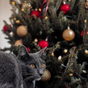 Tipy na kočičí Vánoce