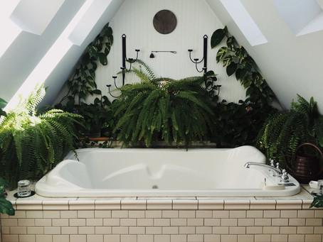 Nejlepší rostliny do koupelny, část první