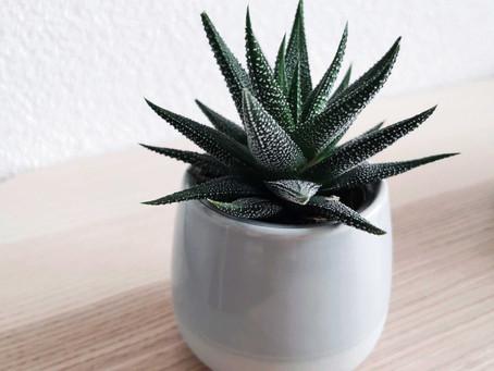 Nenáročné rostliny s benefity pro vaši domácnost