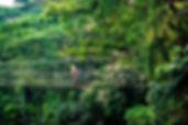 Nature-Hiking-Tours-Jaco-Costa-Rica-3.jp