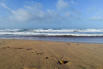 Sea, Sand and Paw prints