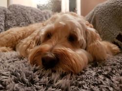 Enjoying the sofa!