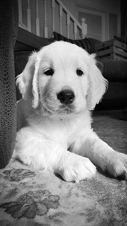 Hello! 10 weeks old pup