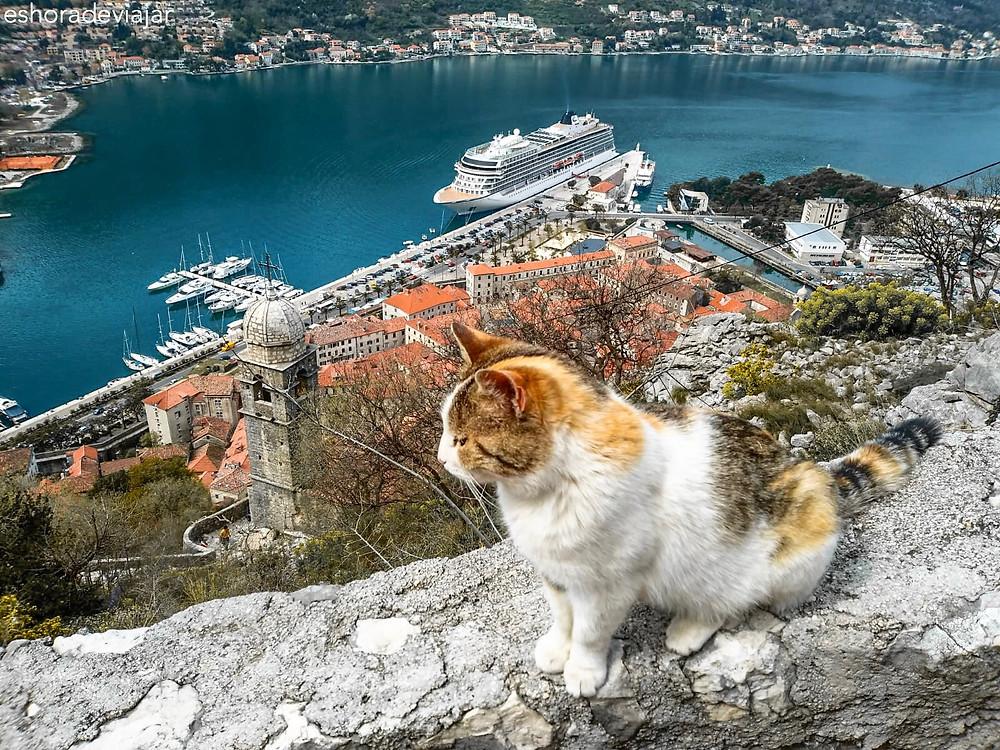 Gato en la Fortaleza de San Juan