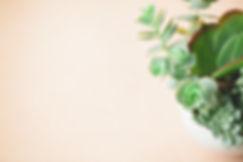 Minimalist_Succulents-102.jpg