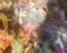 bianca beetson.jpg
