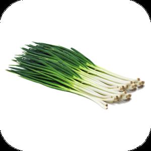 Onion H-112