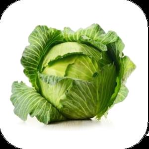 Cabbage V-114