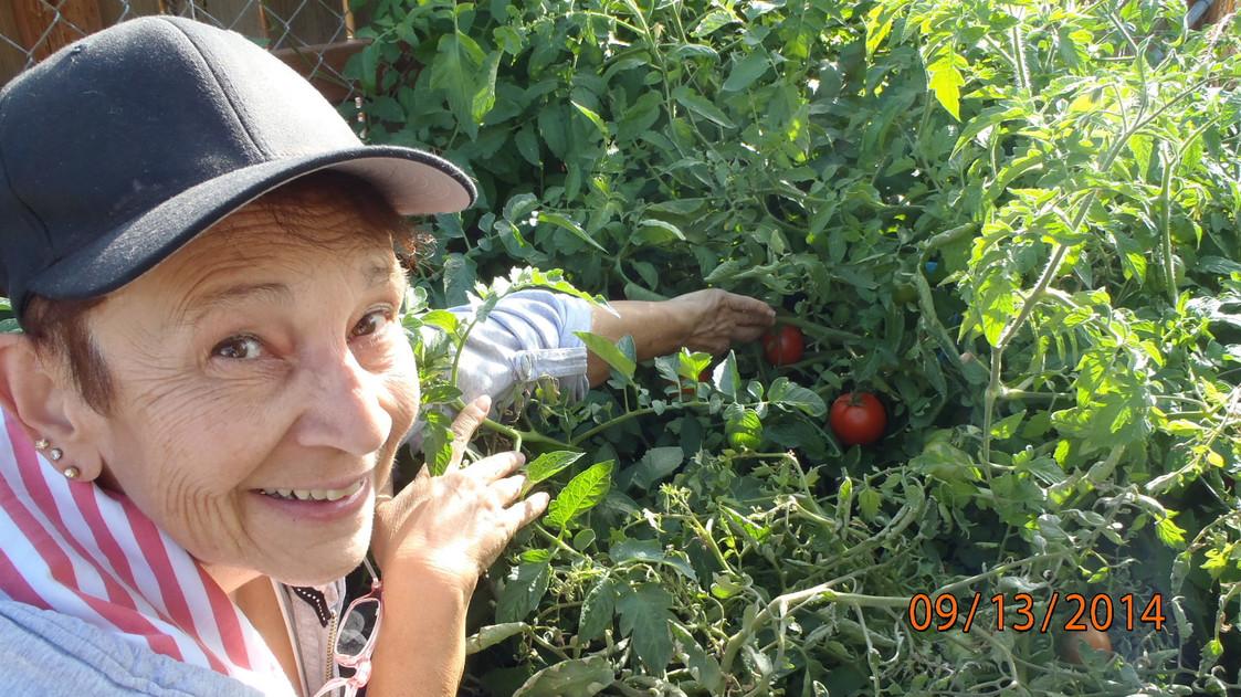 My_tomatos.jpg