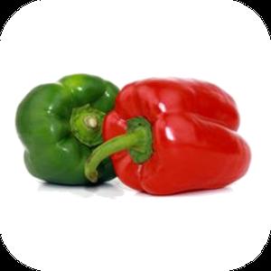Bell Pepper V-118