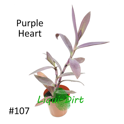 Purple Heart (Dark Purple)