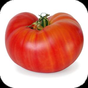 Tomato V-120