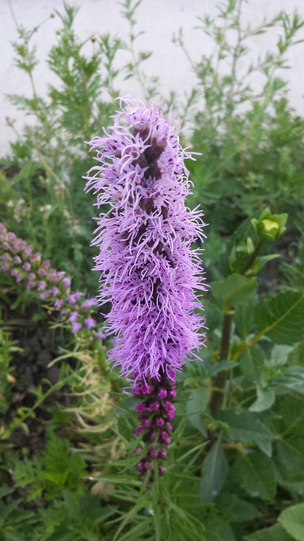 Purp_stick_flower.jpg