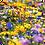 Thumbnail: Wildflower Seeds