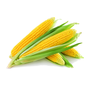 Corn V-109