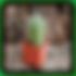 Mammillaria nivosa (Woolly Nipple Cactus