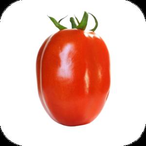 Tomato V-131