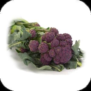 Broccoli V-135
