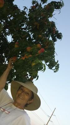 normal_Peaches.jpg