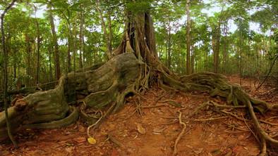 Deep Jungle.jpg