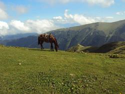 Borjom Kharagauli National Park