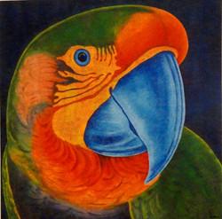 Papagalia - AR 1474