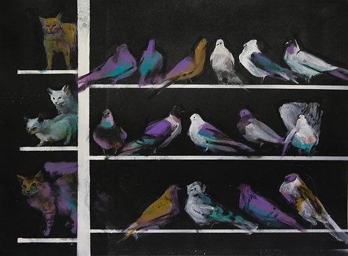 Саша Кокачева, Охота на голубей