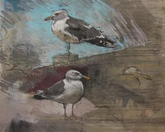 Gull Study No. 2