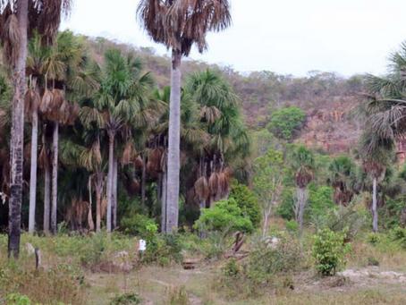 INCRA e Poder Judiciário reconhecem fraudes na aquisição de terras  por TIAA-CREF/COSAN e Harvard