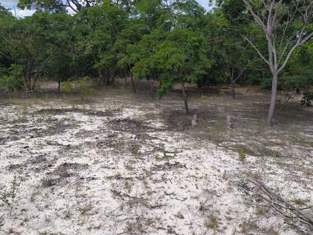 Bahia já autorizou o desmatamento de 34.307,712 ha durante a pandemia