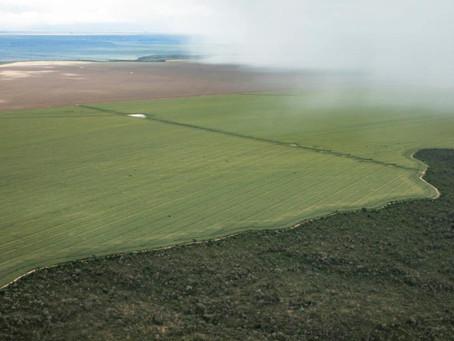 Exterminador do futuro: Estrondo inicia desmatamento gigante no Cerrado