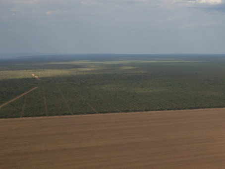 Organizações pedem que governo baiano revogue autorização ilegal para desmatamento de 24.732 ha
