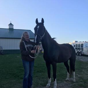Transport Horse