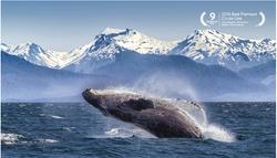 Alaska Whale Breech