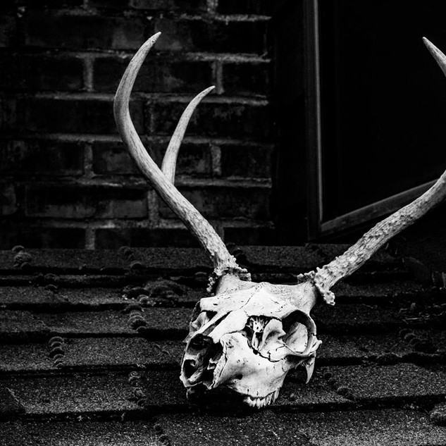 grayscale-photo-of-skull-with-antler-992