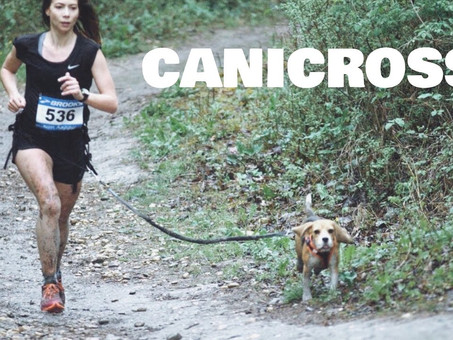 RUNNING WITH YOUR DOG:  Keeping You Both Fit and Trim