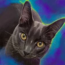 russianblue.png