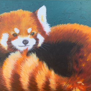 Pinjou the Red Panda (charity)