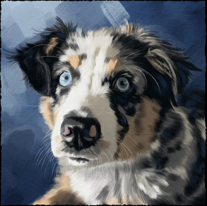 Pet Portraits are a thing