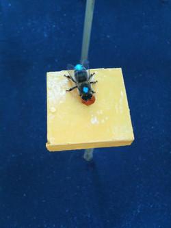bee in blue