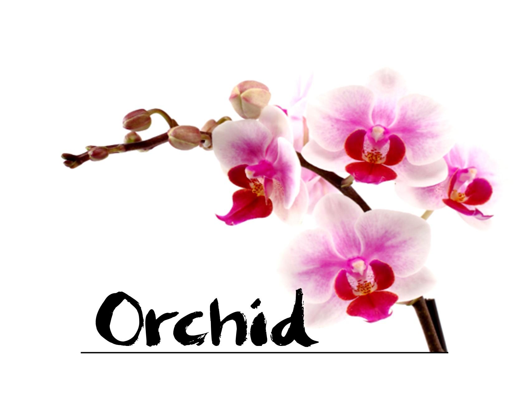 Orchid Lewiston