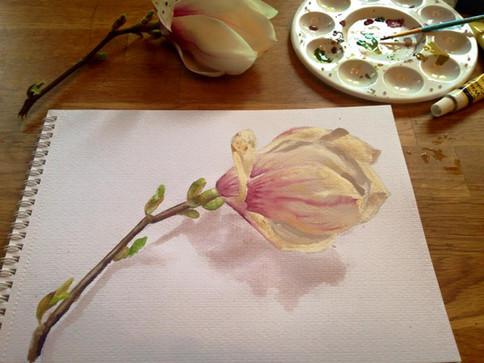Magnolia in watercolour