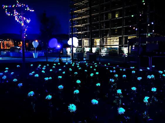 Fleur luminescente, une première mondial