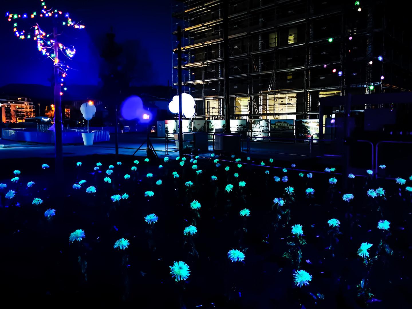 Annemasse inauguration Fleur luminescent