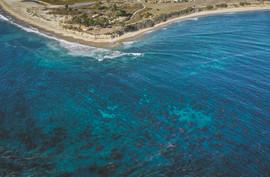 Aerial image of a kelp forest off the coast of Santa Barbara, CA