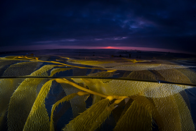 Sunset in the Kelp Forest.